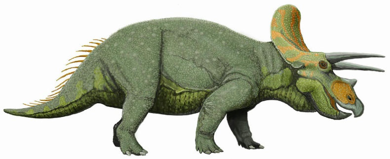 Image of a Triceratops