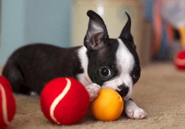 Office Puppy